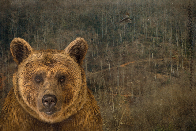 , 'The Bear Went Over the Mountain,' ca. 2018, Brickworks Gallery