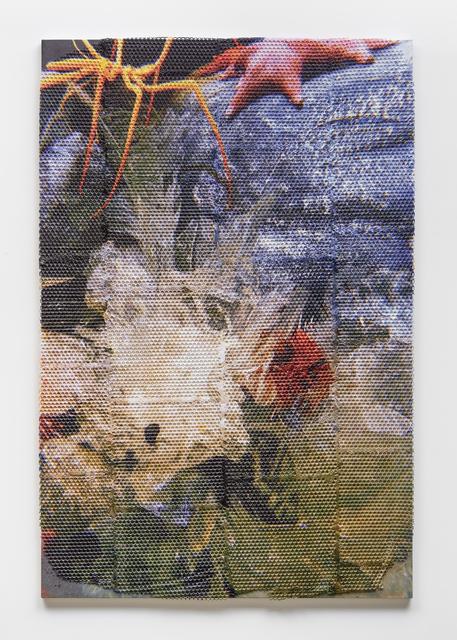 , 'Natural History ,' 2019, Gallery Baton