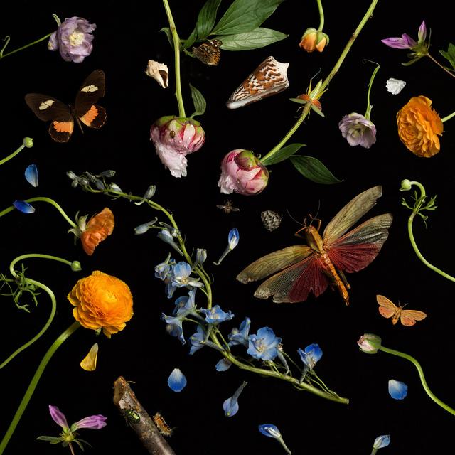, 'Botanical II (Ranunculus and Delphiniums),' 2013, Robert Mann Gallery