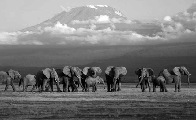 , 'Elephants, Amboseli, Kenya,' 2019, Suite 59 Gallery