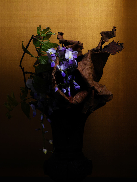 , 'japanese wisteria / lotus,' 2017, Galerie Marie-Robin