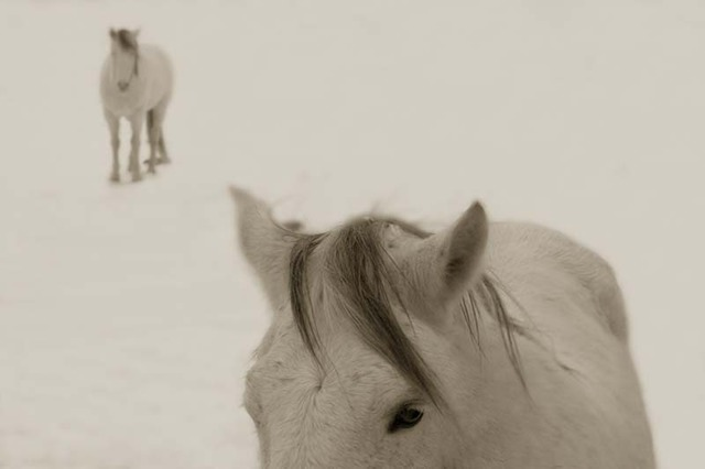Jack Spencer, 'Snow Ponies, Truchas, New Mexico,' 2006, Contessa Gallery