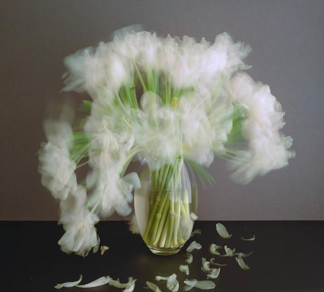 Michael Wesely, 'Stilleben (7.3. – 10.3.2017) ', 2017, Galerie Fahnemann