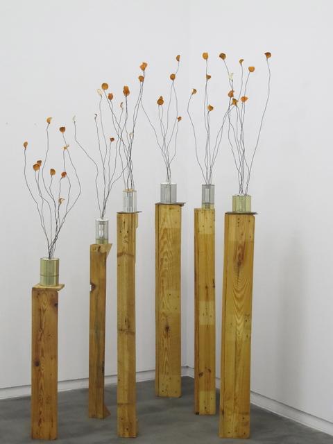 , 'Naranjos,' 2014, Galería Heinrich Ehrhardt