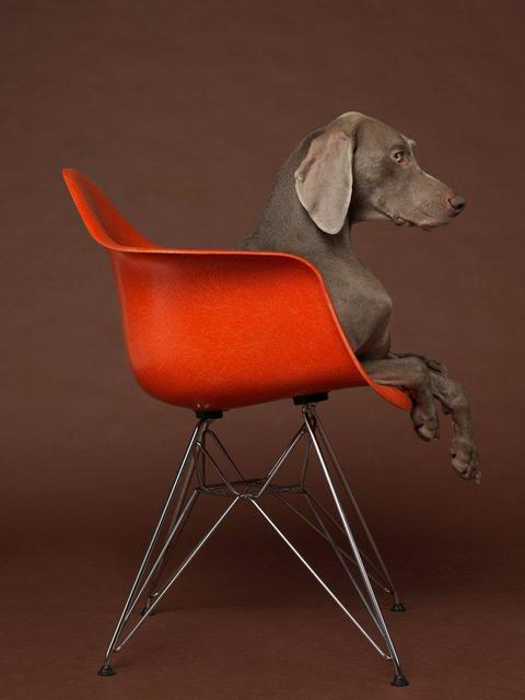 William Wegman, 'Eames Low', 2015, Galerie Wouter van Leeuwen