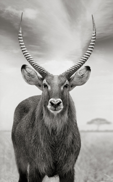 Anton Lyalin, 'Portrait of Africa #44', 2010, Sohn Fine Art