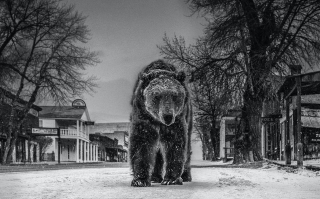 David Yarrow, 'Out of Towner', 2019, Photography, Digital Pigment Print on Archival 315gsm Hahnemuhle Photo Rag Baryta Paper, Isabella Garrucho Fine Art