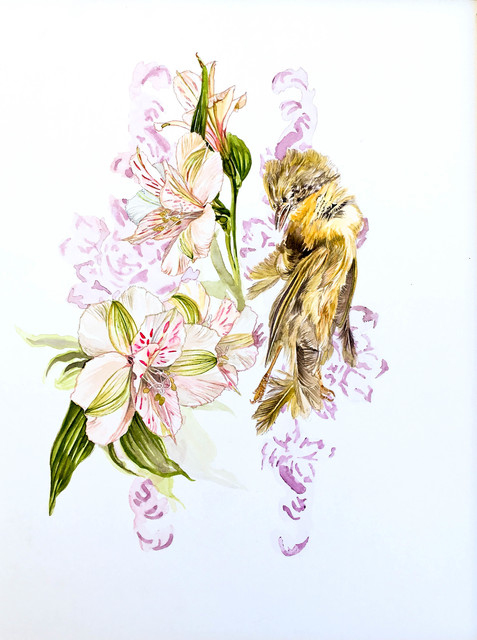 , 'Peruvian Lily and Yellow Bird,' 2017, Ghostprint Gallery