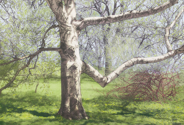, 'Birch with Red-Branched Bush,' , Pucker Gallery