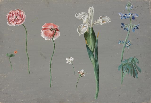 Johann Christian August Birnbaum, 'Meadow flowers on grey ground, poppy seed, white iris, delphinium and small flowers', 1782, RISD Museum