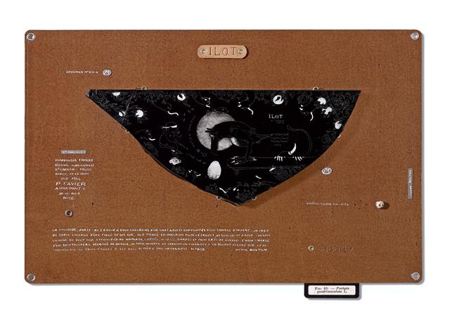 , 'Philippe FAVIER, Hardingia Favieri n°333849,' 2015, Art Bärtschi & Cie | Geneva, Switzerland