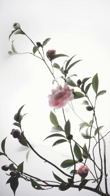 Wu Chi-Tsung, 'Still Life 011 - Tsubaki', 2019, Galerie du Monde