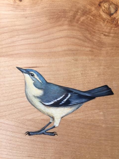 , 'Cerulean Warbler Dendroica cerulea,' 2013, Andra Norris Gallery