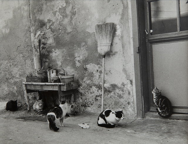 , '6 chats, la Pointe Courte,' 1954, Blum & Poe