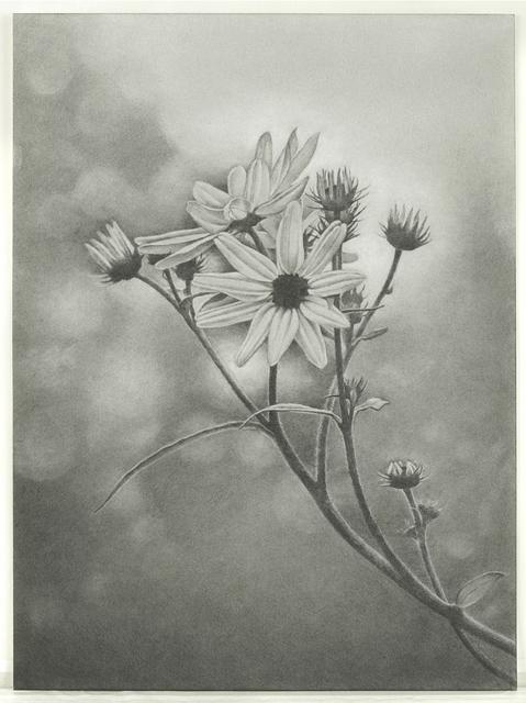 Mary Reilly, 'Wildflower, Central Park', 2011, Garvey | Simon