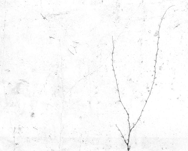 , 'White 10,' 2000, JHB Gallery