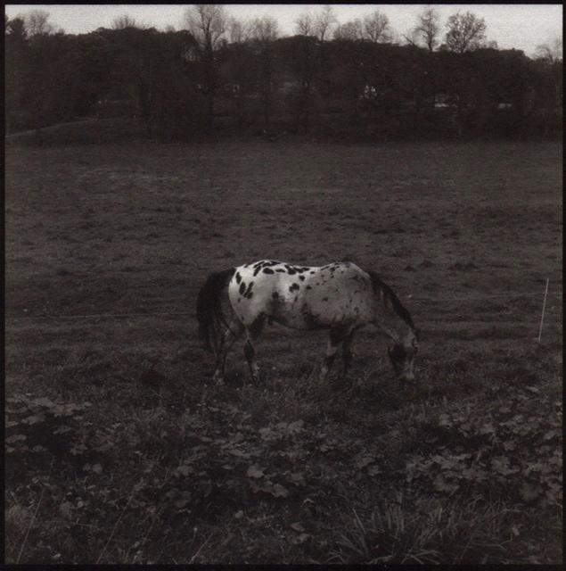 Denise Oehl, 'Horse', 2018, John Davis Gallery