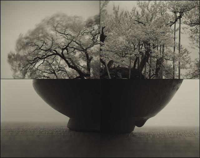 , 'Jindai_SAKURA (C883),' 2017, Micheko Galerie