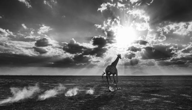 David Yarrow, 'Heaven Can Wait II', 2014, Photography, Digital Pigment Print on Archival 315gsm Hahnemuhle Photo Rag Baryta Paper, Samuel Owen Gallery