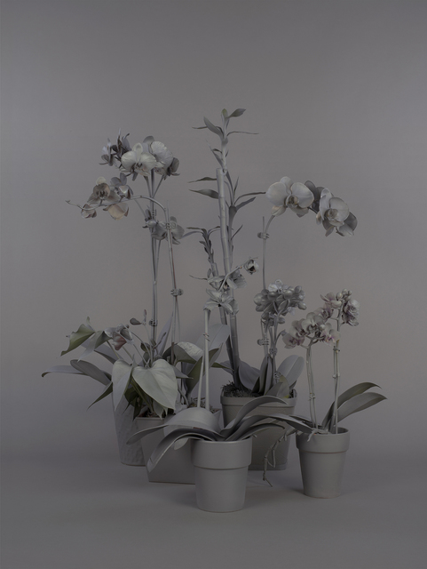 , 'Neutral Orchids (Cluster 1),' 2016, RYAN LEE