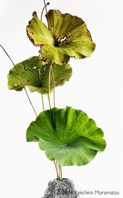 , 'Lotus 19,' 2018, Galerie Marie-Robin