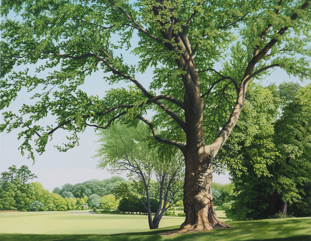 Anita Mazzucca, 'A Very Large Tree on Bayonet Farm', 2017, Painting, Oil on Canvas, Gallery Henoch