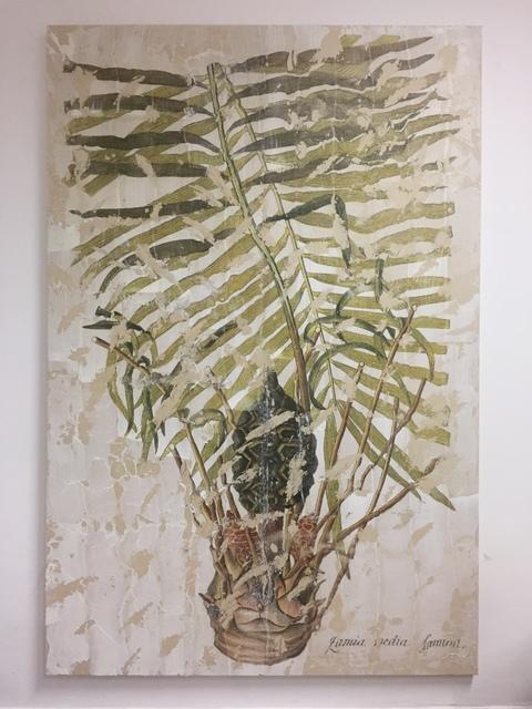 , 'Zamia Pumila,' 2018, Charim Galerie