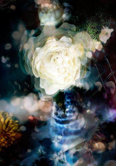 , 'Petites Natures #23,' 2015, Muriel Guépin Gallery