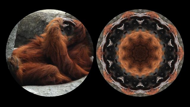 Leslie Thornton, 'Orangutan', 2010, Winkleman Gallery