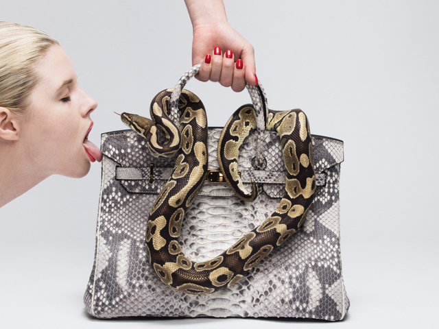 , 'Python Birkin Kiss,' ca. 2016, Samuel Lynne Galleries
