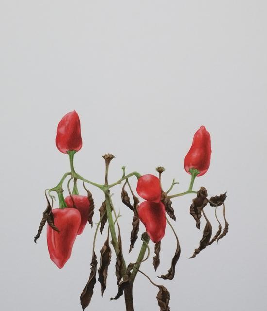 , 'Seca pimenteira I/ Dry pepper I,' 2013, Galeria Enrique Guerrero