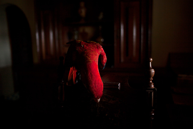 , 'Arara Vermelha I (da série Zoo) | Scarlet Macaw I (series Zoo),' 2015, Zipper Galeria
