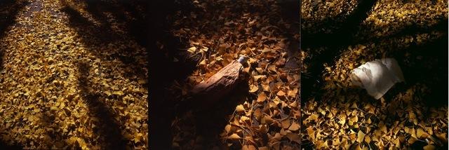 , 'Outono em NY / Autumn in NY,' 2014, Silvia Cintra + Box 4