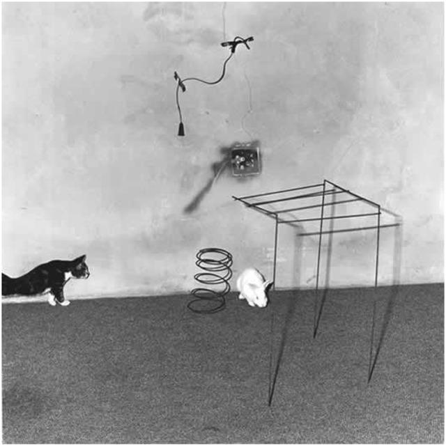 , 'Animal Abstraction,' 2002, ARTBAENA