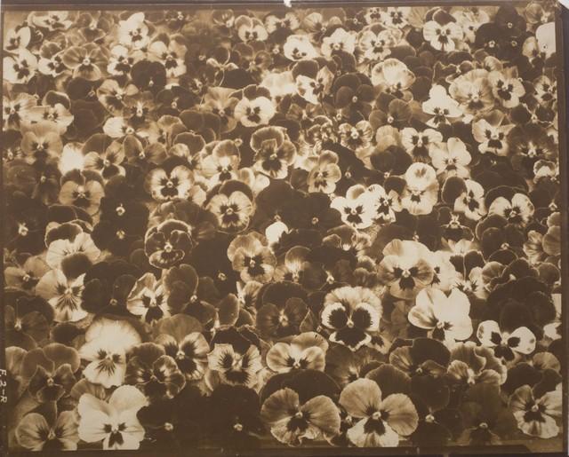 , 'Friends, Romans and Countrymen,' c. 1920, Bruce Silverstein Gallery