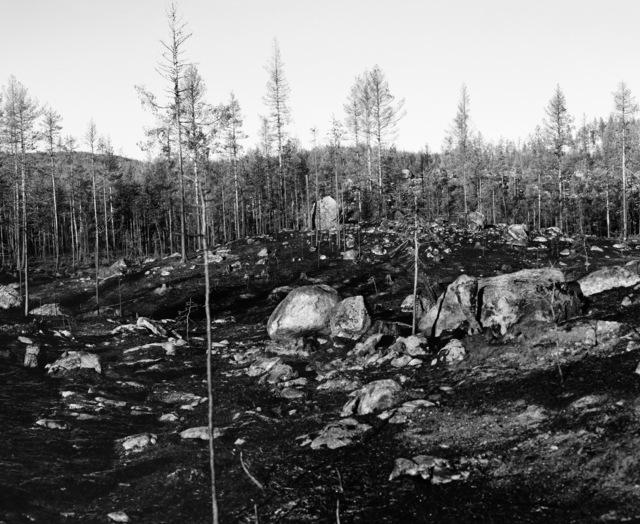 , 'Träd Kan Falla Snabbt och Tyst,' 2020, Galleri Duerr