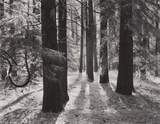 , 'Forest Floor, Yosemite Valley, California,' ca. 1950, The Ansel Adams Gallery