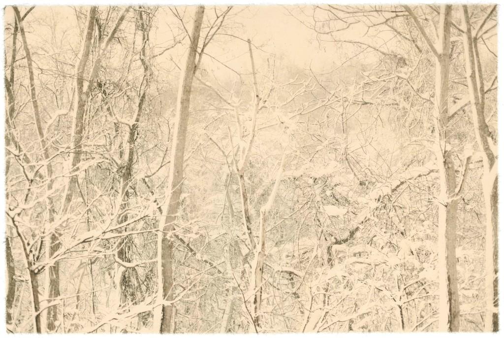 Season Lao,(劉 善恆) / Niseko, Hokkaido, Japan / 57.8 x 38.8 cm / giclee print on handmade paper / 2017 / Edition : 3