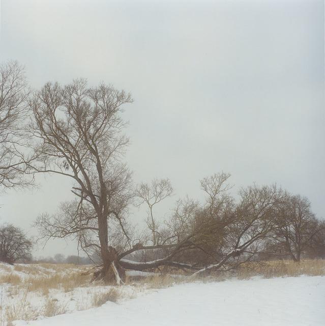 , 'Winter,' 2012, Galerie f5,6