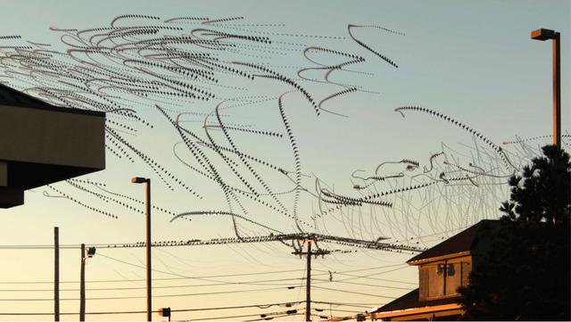 , 'Line Birds 2,' , Diehl Gallery
