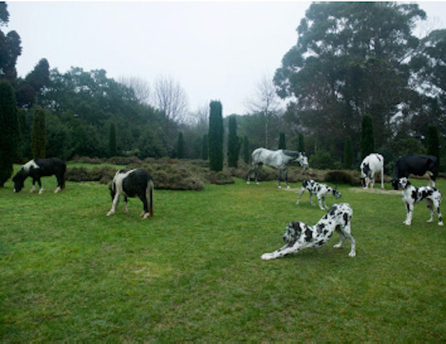 , 'Black & White Animals, Porto ,' 2009, Vistamare