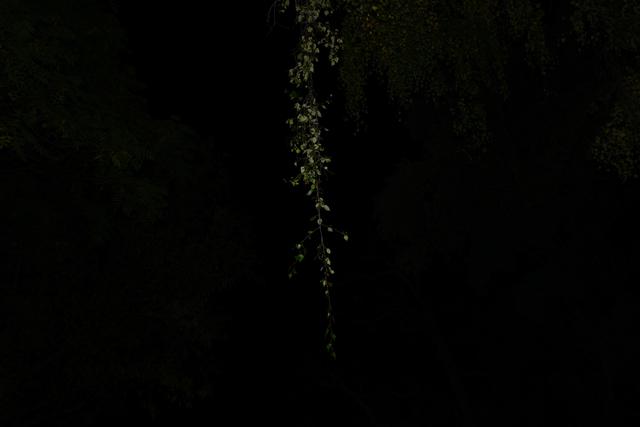 , 'Fade-to-Black 04,' 2014, Migrant Bird Space