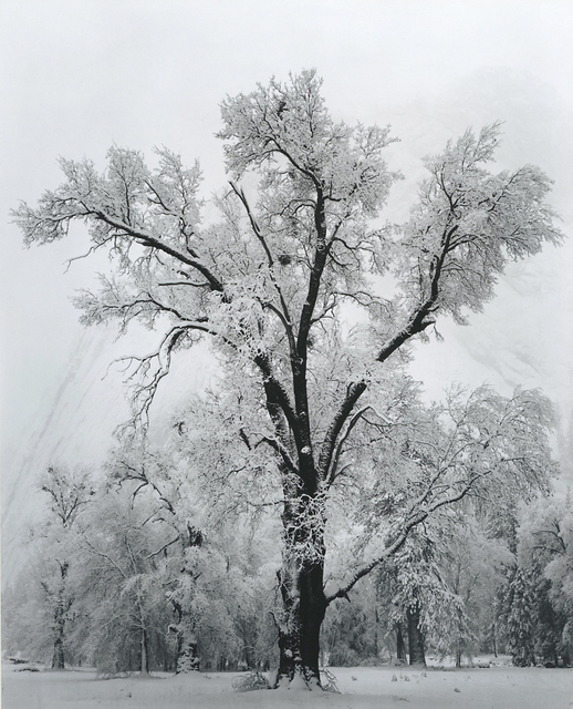 , 'Oak Tree — Snow Storm,' 1948, Richard Moore Photographs