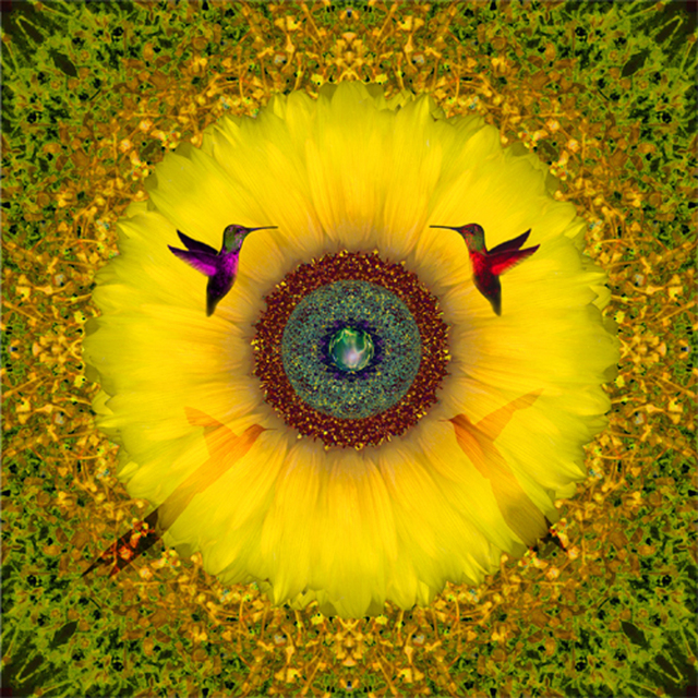 , 'Designer Sunflower,' 2015, Florida Fine Art