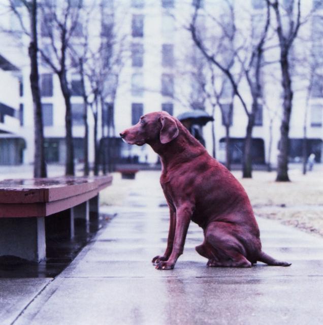 William Wegman, 'Red Dog (From Man Ray:  A Portfolio of 10 Photographs)', 1982, Heather James Fine Art