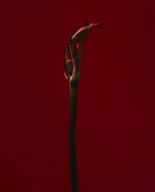 , 'fig. XXVI,' 2017, Galerie SOON