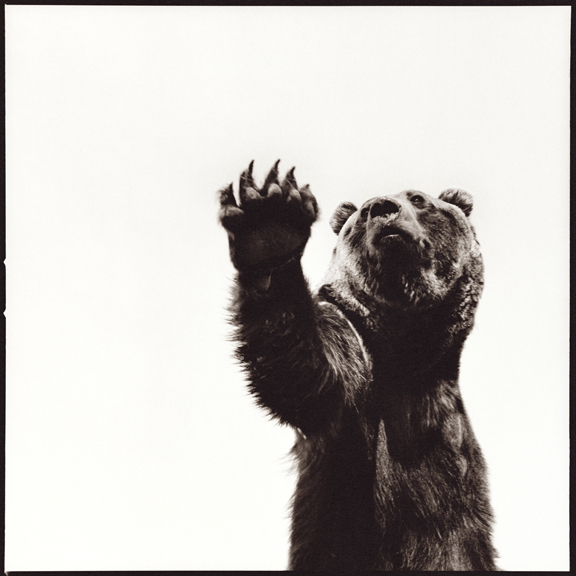Nine Francois, 'Grizzly Bear', Julie Nester Gallery
