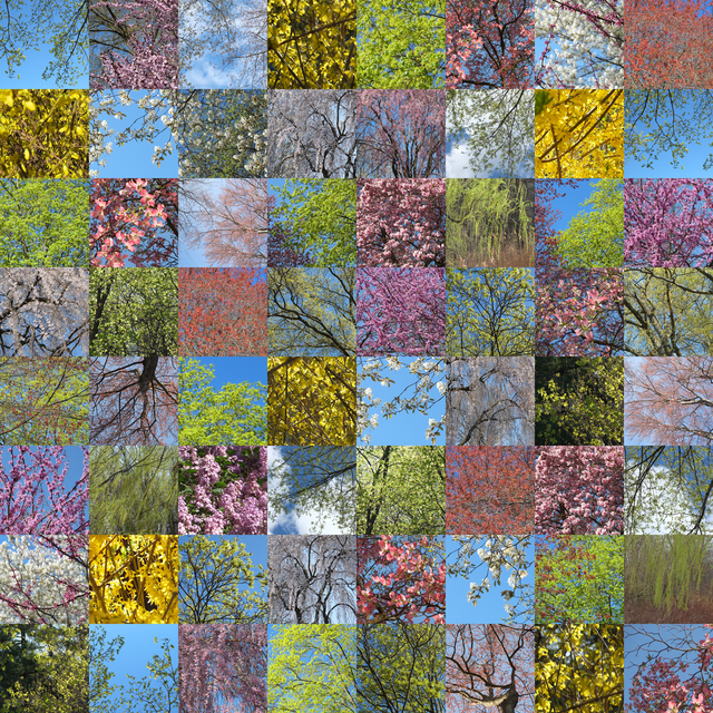 , 'Spring Blooms,' 2015, Susan Eley Fine Art