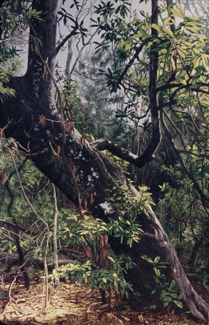 Garrett Middaugh, 'Wild Magnolia', Davis Gallery & Framing