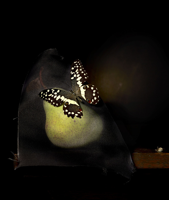 , 'Still life with Pear and Bush Fly,' 2014, .M Contemporary Sydney